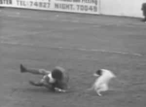 Σκύλος, ο… χειρότερος εχθρός του Τσικ Μπρόντι (video)